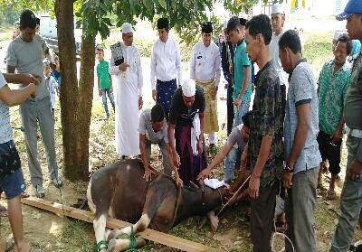 Pemotongan hewan kurban disaksikan Bupati Rohul.