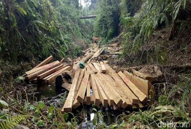 Ilustrasi Illegal Logging.