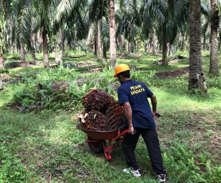 Indonesia memberi fokus yang lebih besar meningkatkan produktivitas minyak sawit dengan meminimalisir kebutuhan ekstensifikasi lahan pertanian