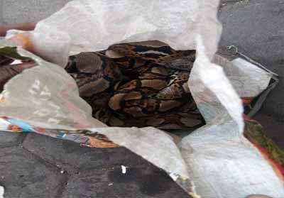 Karung berisi ular yang dilemparkan ke Asrama Papua di Surabaya. Foto: Detik