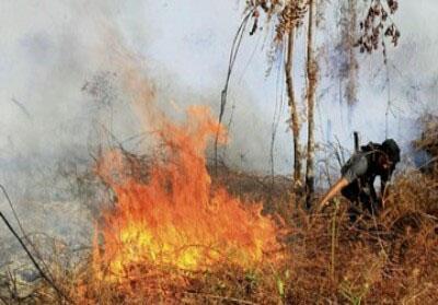 Ilustrasi: Karhutla Riau