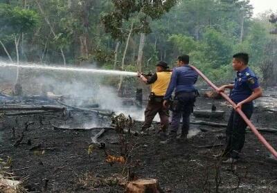 Tiga petugas Damkar Kuansing bahu membahu memadamkan api di lahan yang terbakar.