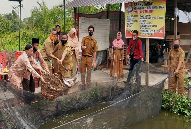 Plt Sekda Rohil, HM Job Kurniawan AP MSi didampingi Kadiskan, Muhammad Amin SPi melakukan panen ikan patin di kolam milik Pokdakan Multi Arwana.
