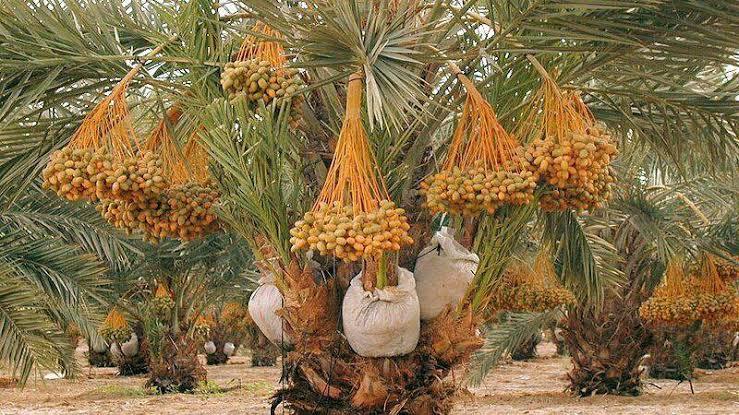 Sedekah seperti menanam di kebun sendiri berbuah, apalagi di kebun Allah. Kalaupun buahnya tidak lebat, paling tidak pasti berkembang