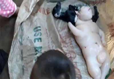 Wujud anak kambing yang lahir di Sultan Kudarat, Filipina.