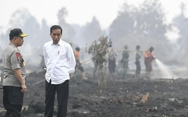 Presiden Joko Widodo ketika meninjau kebakaran lahan di Riau belum lama ini.