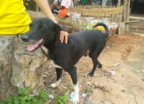 Ping pong, anjing yang menemukan bayi baru lahir dikubur ibunya di Thailand. FOTO: Mirror