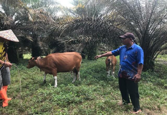 Wagyo, masyarakat Batu Gajah Tapung Kampar Penerima bantuan kemitraan DMPA dari salah satu Pemasok APP SInar Mas PT PSPI Distrik Petapahan.