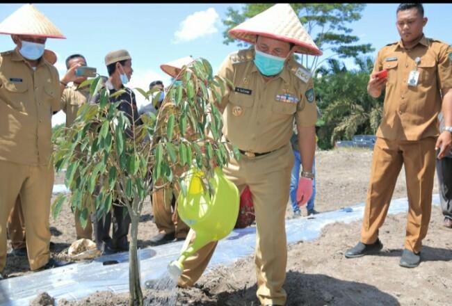 Bupati Sukiman, saat meninjau kebun durian unggul serta buah semangka yang merupakan program Inovasi Desa Pasir Luhur Kecamatan Kunto Darussalam, di lahan desa 4 hektar yang dianggarkan melalui Dana Desa tahun 2020.