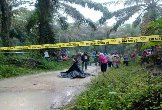 Mayat pria ditemukan di jalan perkebunan di Dumai.