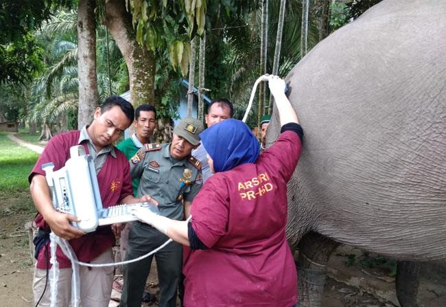 Petugas cek kehamilan Nagtini menggunakan alat medis USG.