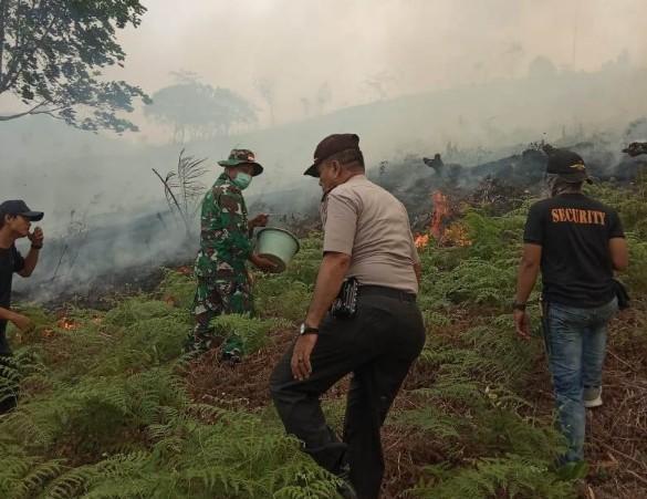 Kawasan hutan lindung yang terbakar didesa Pantai Kecamatan Kuantan Mudik tidak seperti hutan lindung.