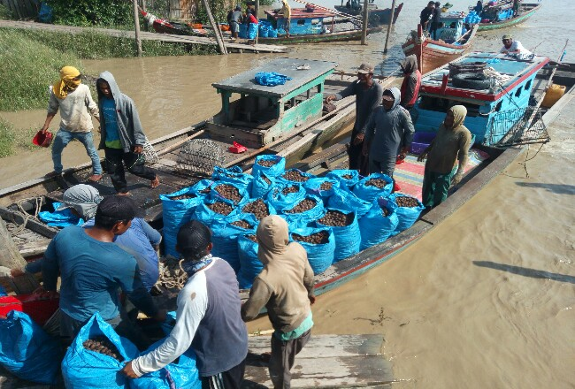 Nelayan menangkap kerang dalam jumlah yang banyak.