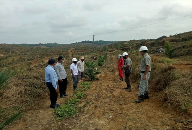 Peremajaan kelapa sawit KUD Karya Jaya.