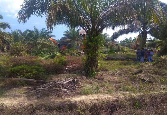Proses eksekusi 160 Ha lahan yang dilakukan PN Kelas II Rengat, Kabupaten Indragiri Hulu (Inhu), Senin (16/3/2020) siang.