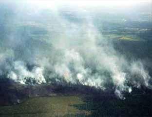Ilustrasi: kebakaran hutan.