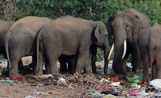 Ilustrasi: Gajah liar.