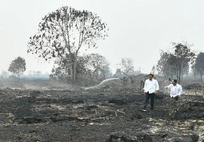 Presiden Jokowi saat mengunjungi lokasi Karhutla di Pelalawan.