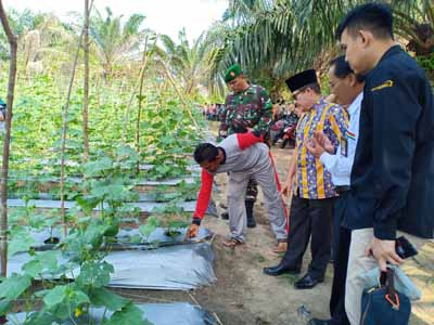 Walikota Dumai Drs H Zulkifli AS MSi meninjau lahan pertanian kelompok tani Bukit Mekar binaan Pertamina RU II Dumai di Kelurahan Bukit Datuk Kecamatan Dumai Selatan baru-baru ini.