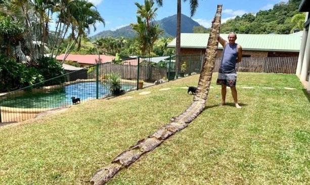 Kulit ular 7 meter yang ditemukan Morris. FOTO: ABC News.