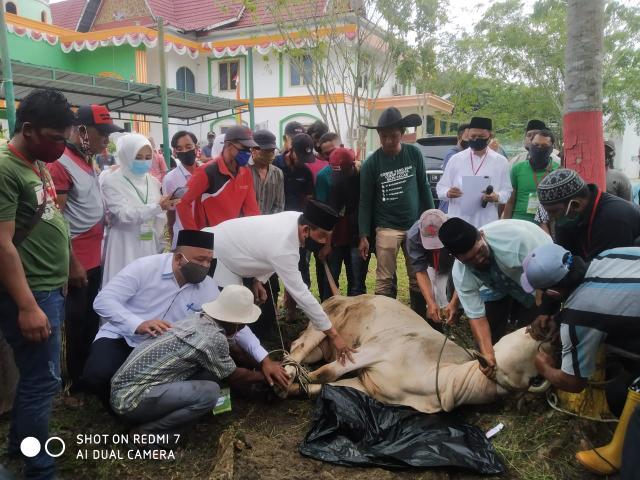 Pemotongan sapi kurban di halaman kantor DLH Rohil, Jalan Kecamatan Batu Enam, Minggu (2/8/2020) pagi.