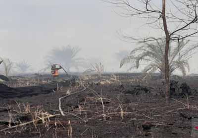 Lahan terbakar di Koto Gasib Siak, Foto: Antara