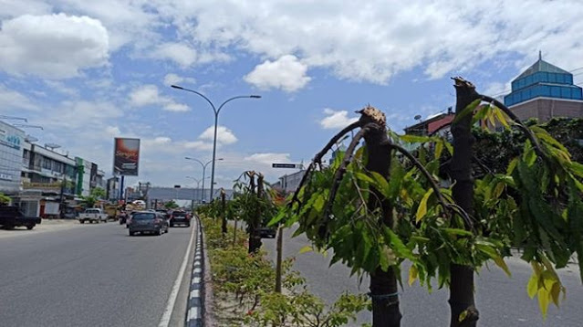Pohon ditebang sepihak di Jalan Tuanku Tambusai Pekanbaru.