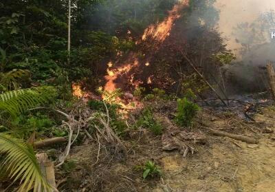Lahan yang diduga berada dalam kawasan hutan lindung Bukit Betabuh yang terbakar Minggu (22/9) di Desa Pangkalan Pucuk Rantau.