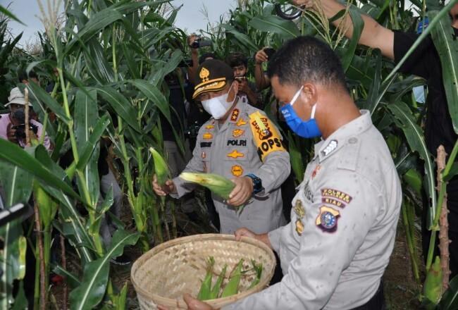 Kapolda Riau saat panen jagung.