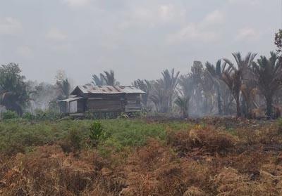 Salah satu rumah warga di Desa Kebun, Kecamatan Rangsang, Kabupaten Kepulauan Meranti, Riau, yang dikepung api karhutla, Rabu (6/3/2019). FOTO: Kompas