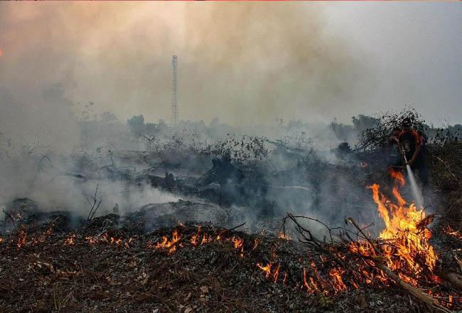 Karhutla di Riau. FOTO: Rony Muharrman/Antara.