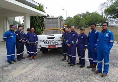 Persiapan memburu keberadaan Harimau Sumatera yang masuk ke kawasan PT Chevron.