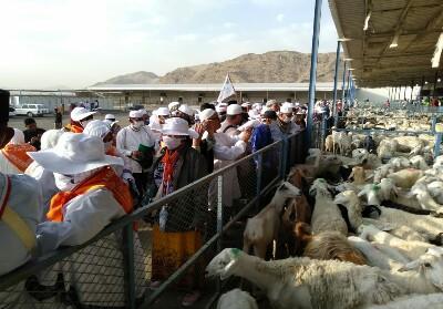 JCH Bengkalis melaksanakan Dam berupa penyembelihan hewan Domba.