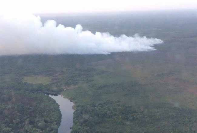 Kebakaran hutan di Suaka Margasatwa Giam Siak Kecil, Riau, Kamis (16/1/2020). Foto: Antara