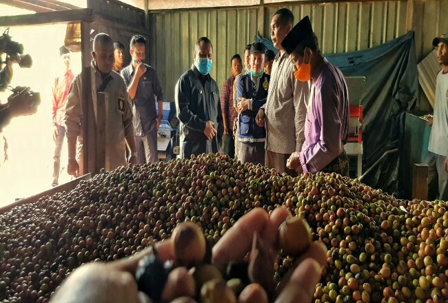 Kunjungan Bupati Kepulauan Meranti, Drs H Irwan bersama OPD terkait saat melakukan peninjauan dalam rangka membangun sentra industri kopi Liberika.