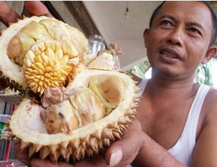 HALLORIAU : Ajaib,Warga Rohul Temukan Durian dalam Duri