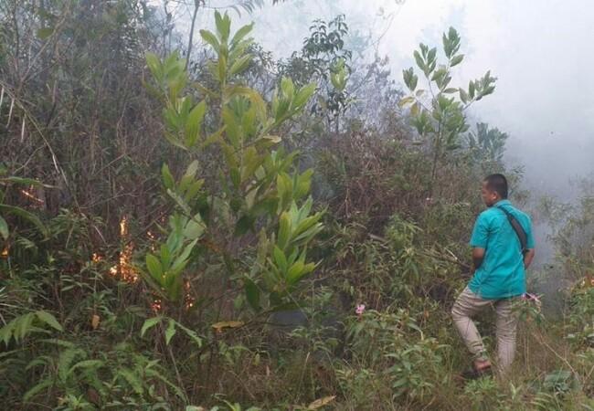 Lahan milik UIN Suska terbakar. Foto: Kompas