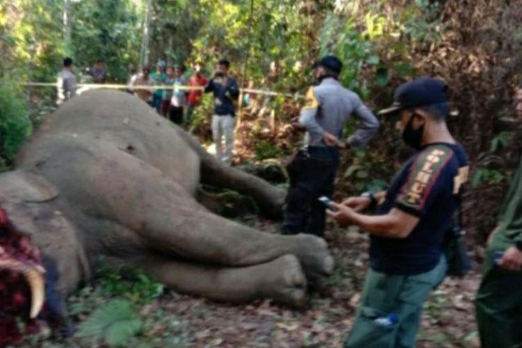 Bangkai gajah sumatera yang ditemukan dalam kondisi belalai terpotong di wilayah Kelurahan Kelayang, Kecamatan Kelayang, Kabupaten Inhu, Riau, Rabu (15/4/2020).