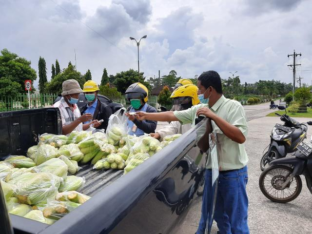 Jagung 1 ton yang dipanen Pak Sulis habis terjual dan dibeli oleh karyawan-karyawan IKPP.