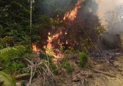 Lahan yang diduga berada dalam kawasan Hutan Lindung Bukit Betabuh yang terbakar Minggu (22/9/2019) di Desa Pangkalan Pucuk Rantau.