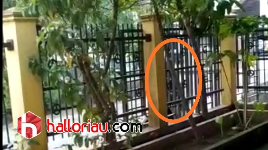 Dora saat mengeluarkan kemaluannya di depan pagar rumah warga.