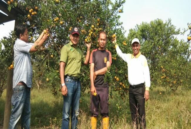 Para petani berfoto di lahan jeruk sebelum pandemi Covid-19.