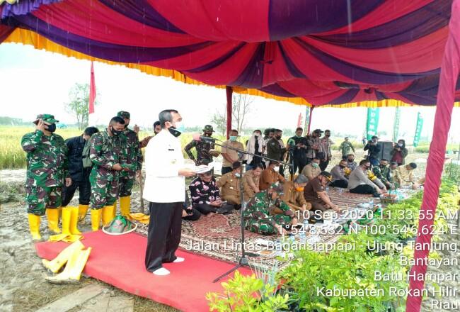 Gubri Syamsuar saat memghadiri panen raya padi di Rohil.
