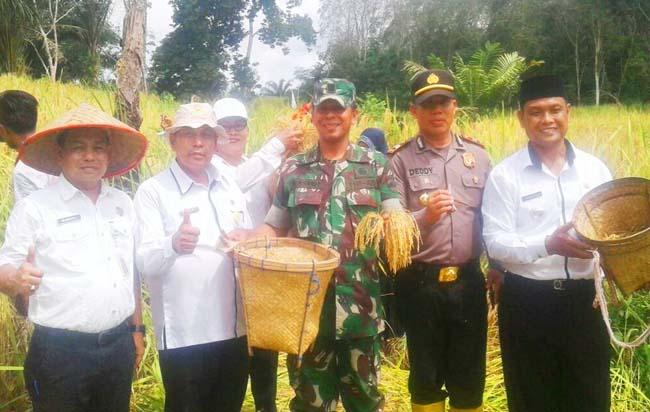 Kadis TPH Rohul, Danramil 02/Rambah, Kapolsek Rambah Samo dan petani panen bersama padi gogo.