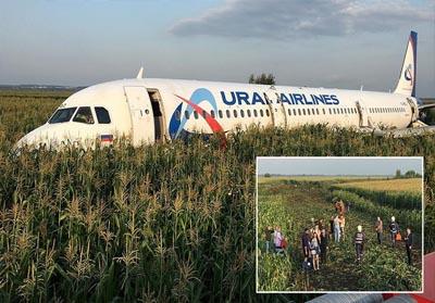 Pesawat Ural Airlines Airbus A321 mendarat darurat di sebuah ladang jagung di luar Moskow. FOTO: Reuters