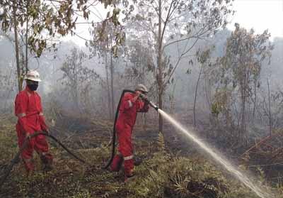 Data terkini karhutla di Sumatera dan Kalimantan (Foto: Dok. BNPB)