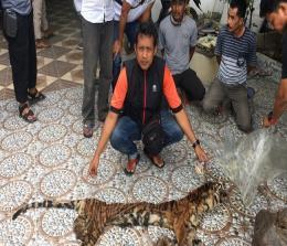 Ekspos perdagangan kulit dan organ Harimau di Riau.