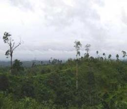 Hutan Riau.