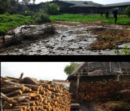 Kilang Sagu yang membuang limbah sembarangan dan panglong arang yang memproduksi kayu arang menggunakan kayu dari hutan bakau, tampak kayu berukuran sedang dipotong- potong.