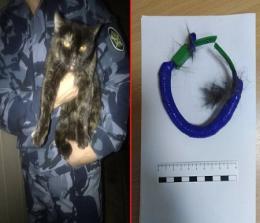 Polisi Rusia menahan seekor kucing karena mencoba menyelundupkan narkoba ke penjara